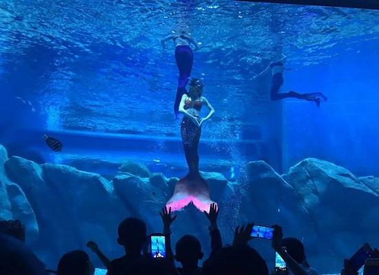 美人鱼表演
